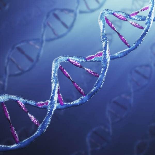 Analyses génétiques